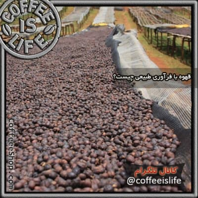 قهوه   قهوه با فرآوری طبیعی چیست ؟ فرآوری طبیعی (Natural Processing) یا فرآوری خشک (Dry Processing)