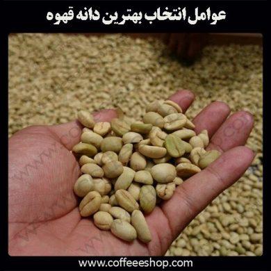 بهترین دانه قهوه چگونه انتخاب می شود؟