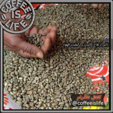 اهمیت ارتفاع کشت قهوه بر طعم آن